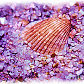 Silver Bells And Cockle Shells . . . by Judi Bagwell