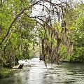 Silver Springs River In The Rain 2 by Betty Eich