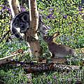 Silver Tabby And Wild Rabbit by Jane Burton