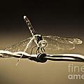 Silver Wings by Kim Henderson