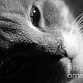 Simba by Living Color Photography Lorraine Lynch