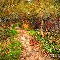 Simple Pathways by Tara Turner