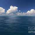 Simplicity Great Barrier Reef by Susan Gary