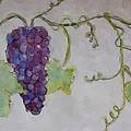 Simply Grape by Heidi Smith