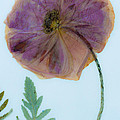 Simply Poppy  by Marie Jamieson