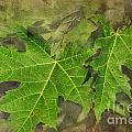 Simply Summer Maple Leaves by Debbie Portwood