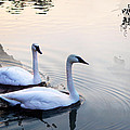 Sing Of White Swan by Joanna Wald