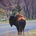 Single Buffalo In Yellowstone Np by Susanne Van Hulst