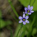 Sisters Of The Purple Plants by LeeAnn McLaneGoetz McLaneGoetzStudioLLCcom