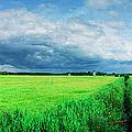 Skaane Greens by Jan W Faul