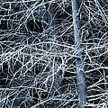 Skeleton Tree by Judi Bagwell