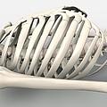 Skeleton's Torso, Artwork by David Mack