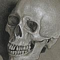 Skull Study by David Kleinsasser
