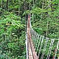 Sky Bridge 2 by Aimee L Maher ALM GALLERY