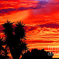 Morro Bay California Sky Fire by Tap On Photo