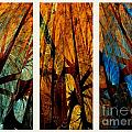 Sky-trees Montage by Klara Acel