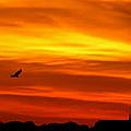 Sky Waves by Adele Moscaritolo