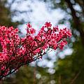 Skylit Blooms by Mike Reid