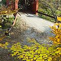 Slaughter House Bridge And Fall Colors by James Forte
