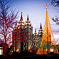 Slc Temple Tree Light by La Rae  Roberts