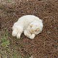 Sleeping Ivory The Cat by Peggy Wilburn