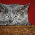 Sleeping Pixie by Teresa Mucha