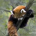 sleeping Small Panda by Heiko Koehrer-Wagner