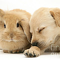 Sleepy Puppy And Rabbit by Mark Taylor