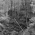 Slovenian Forest In Black And White by Greg Matchick