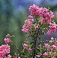 Slow Rain by Nava Thompson