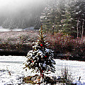Small Christmas Tree Filtered by Duane McCullough