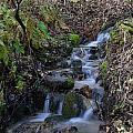 Small Creek by Doug Lloyd