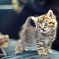 Small Cute Kitten by Malcolm MacGregor