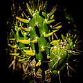 Small Green Cactus by Michael Goyberg