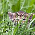 Small Kitten In The Grass by Michal Boubin
