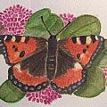Small Tortoiseshell Butterfly by Mark Dermody