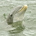 Smiling Dolphin by Rick Frost