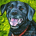 Smiling Lab by Susan A Becker
