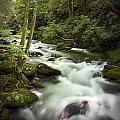 Smokey Mountain Stream No.312 by Randall Nyhof