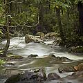 Smokey Mountain Stream No.326 by Randall Nyhof