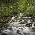 Smokey Mountain Stream No.362 by Randall Nyhof