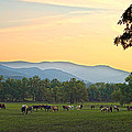 Smoky Mountain Horse Herd by Randall Branham