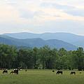 Smoky Mountain Pasture by David White