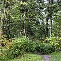 Smoky Mountain Path by Mike Aldridge