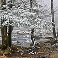 Smoky Mountain Stream by Tom and Pat Cory