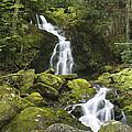 Smoky Mountain Waterfall - Mouse Creek Falls by Bill Swindaman