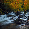 Smoky Mountains Stream by Ron Sloan