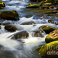 Smoky Mtn Stream by Paul W Faust -  Impressions of Light