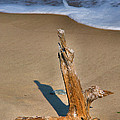 Snag And Surf II by Steven Ainsworth