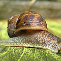 Snail by Chris Day
